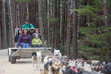 Sled Dog Discovery in Skagway