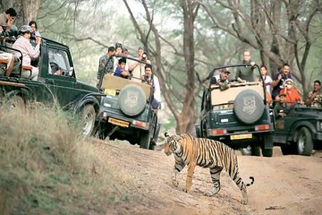 Golden Triangle Tour With Safari ( Ranthambore )