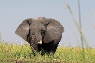 9-dagers Okavango Wilderness Trail...