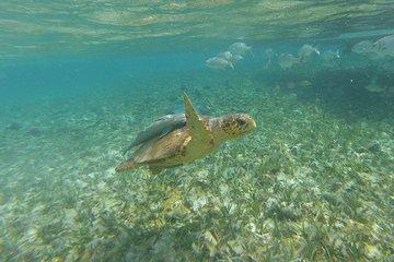 HOL CHAN snorkeling (pour les...