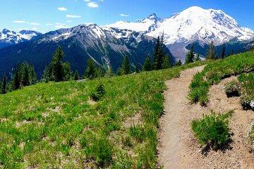 Escursione al monte Rainier & Taste