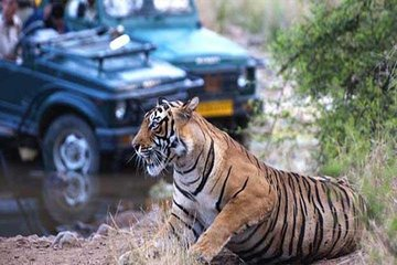 Golden Triangle Tour With Tiger Safari at Ranthambore 6 days