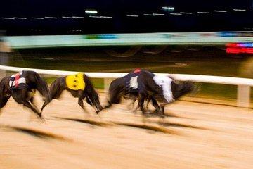 Adult Admission Greyhound Racing