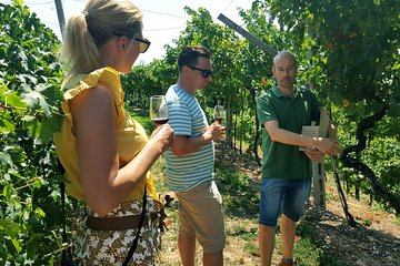 Amarone Wine Tour (all-inclusive full day with lunch and expert wine guide)