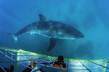 Private Shark Diving