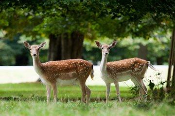 鹿看和摄影。