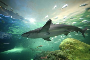 Skip the Line Ripley's Aquarium of Canada Ticket in Toronto
