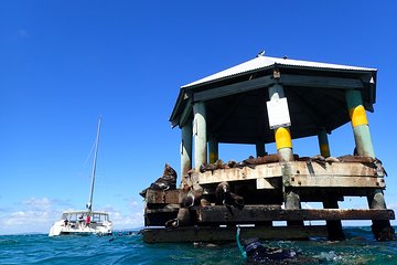 Sailing cruise and Snorkel with Seals