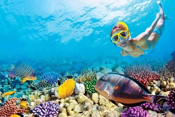 Full-Day Key West Tour and Coral Reef Snorkeling with Open Bar