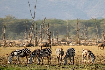 Trilha Serengeti de 6 Dias, Safari de...