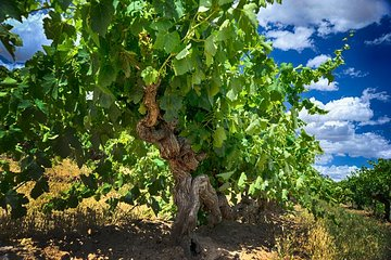 Small Tour Barossa Valley Voyager Tour from Adelaide or Glenelg