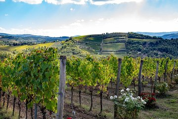 Tuscany Cheese and Wine-Tasting Tour with Lunch from ...