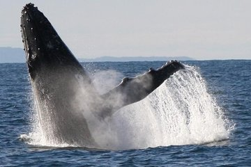 Sydney Eco Whale Watching Small Group Cruise Tickets