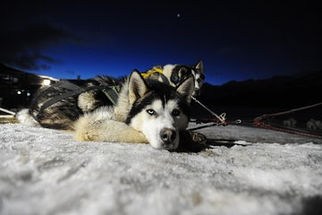 Dog sledding with lunch