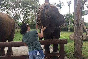 Bali Zoo With Relaxation Time At Halo Bali Spa 2021