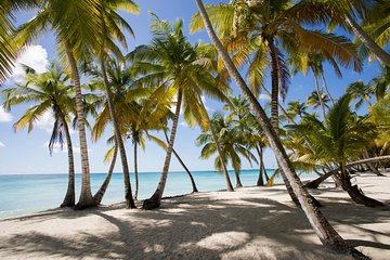 Saona Island Day Trip From Punta Cana with Lunch and Open Bar Included