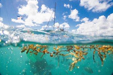 Punta Cana Small-Group Sailing and Snorkeling Catamaran Tour