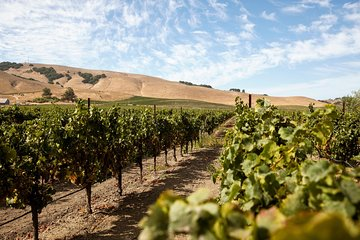 Viticulture with Charm: Sonoma Valley Wine Tour from San Francisco