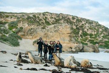 Small-Group Kangaroo Island 4WD Tour from Adelaide