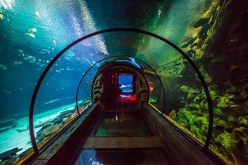 Shark Reef Aquarium at Mandalay Bay Hotel in Las Vegas 2019