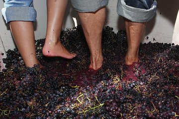 Douro Valley Grape Harvest Small Group Tour: Grape Stomping, Wine Tasting, Lunch Tickets