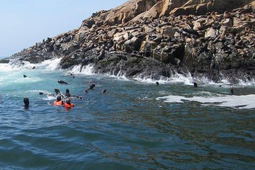 From Lima: Palomino Islands Cruise & Swimming with Sea Lions with Transfers