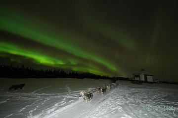 Northern Lights Viewing including Dinner and 1-Hour Dog Sledding