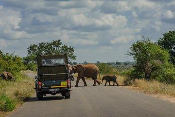 Nhongo Safaris (Kruger National Park) - 2019 All You Need to