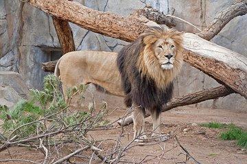 San Diego Zoo 2019
