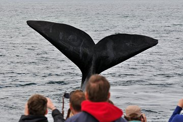 Hermanus Whale Watching Shared Boat Trip and Private Wine Tour from Cape Town