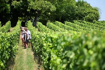 Small-Group Wine-Tasting Trip to the Champagne Region from Paris