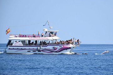 Dolphin Trip - Benalmádena