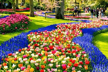Keukenhof & Countryside Tour: Enjoy Holland at it's Best!