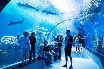 Skip the Line: The Blue Planet - National Aquarium of Denmark Ticket
