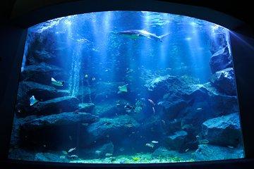 Skip the Line Tokyo Skytree® Ticket & Sumida Aquarium Ticket