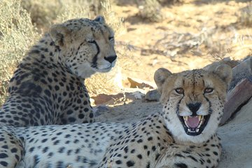 Africa Explore Safaris (Cape Town) - 2019 All You Need to Know