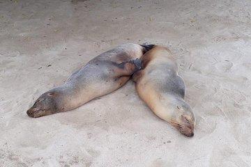Galápagos 7d6n com amigos! STA...