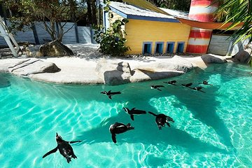 Christmas In The Wild Lowry Park Zoo 2020 Christmas in the Wild at Tampa's Lowry Park Zoo 2020