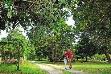 Penang Half Day City Tour Including Tropical Fruit Farm