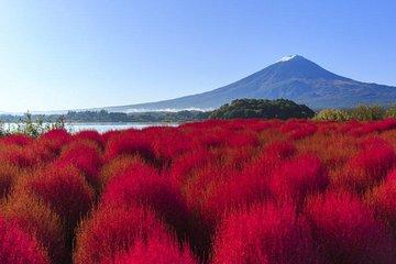 Mt Fuji 5th Station Lake Kawaguchi Oishi Park From Tokyo 2021
