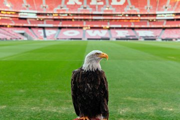 Private Benfica Stadium & Museum Tour with True Football Fan