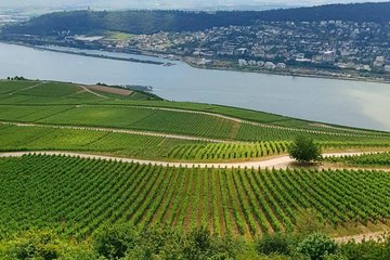 Rhine Valley in Portuguese | Brazilian guide in Frankfurt