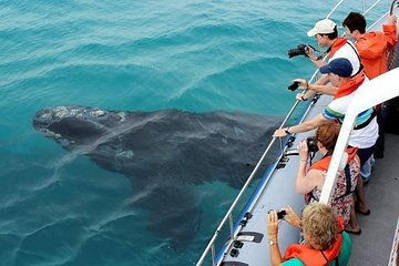 Whale Watching Full Day Guided Private Transfer to Gansbaai from Cape Town