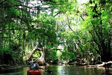 Wild & Scenic Loxahatchee River Guided Tour