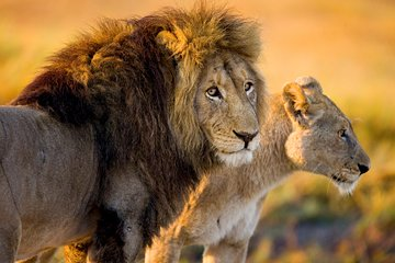 Lion and Safari Park (Broederstroom) - 2019 All You Need to