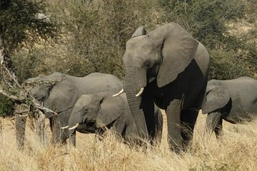 Kruger Park Tours (Johannesburg) - 2019 All You Need to Know
