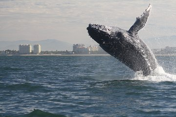 Small-Group Half-Day Whale-Watching Tour in Puerto Vallarta