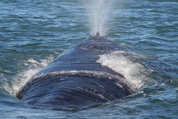 Private Shore Whale Watching Tour to Walker Bay Hermanus from Cape Town