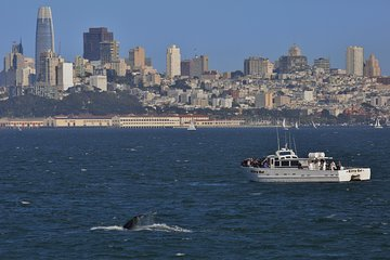 San Francisco Golden Gate Whale-Watching Tour