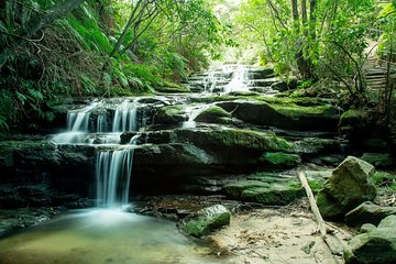 Blue Mountains, Waterfalls, Nature & Dinner Small Group Tour  Tickets